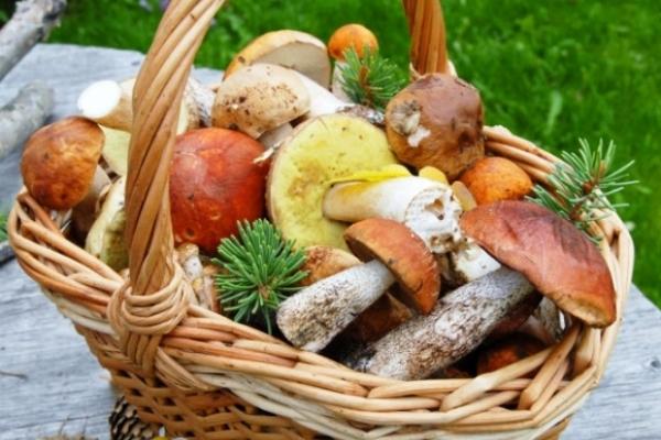 Як українські гриби зробити європейським брендом